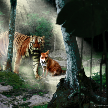 fox and tiger_by maya merko-kurtz